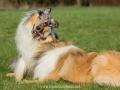 Hundemaedchen_Gaia_Langhaarcollie_Collie_Rough_Hundefreunde_Dasan_Brite_Ami_Treffen_Spaziergang (98)