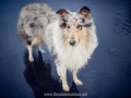 Hundemaedchen_Gaia_Langhaarcollie_52WochenHunde_Projekt2018_Collie (1)