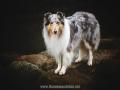 Hundemaedchen_Gaia_Langhaarcollie_52WochenHunde_Projekt2018_Collie (10)