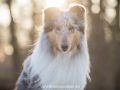 Hundemaedchen_Gaia_Langhaarcollie_52WochenHunde_Projekt2018_Collie (12)