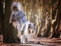 Hundemaedchen_Gaia_Langhaarcollie_52WochenHunde_Projekt2018_Collie (14)