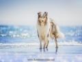 Hundemaedchen_Gaia_Langhaarcollie_52WochenHunde_Projekt2018_Collie (19)