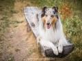 Hundemaedchen_Gaia_Langhaarcollie_52WochenHunde_Projekt2018_Collie (25)
