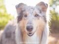 Hundemaedchen_Gaia_Langhaarcollie_52WochenHunde_Projekt2018_Collie (29)