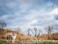 Hundemaedchen_Gaia_Langhaarcollie_52WochenHunde_Projekt2018_Collie (4)