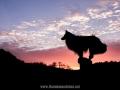 Hundemaedchen_Gaia_Langhaarcollie_52WochenHunde_Projekt2018_Collie (5)