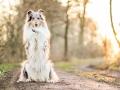 Hundemaedchen_Gaia_Langhaarcollie_52WochenHunde_Projekt2018_Collie (6)