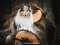 Hundemaedchen_Gaia_Langhaarcollie_52WochenHunde_Projekt2018_Collie (8)