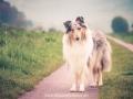 Hundemaedchen_Gaia_Langhaarcollie_52WochenHunde_Projekt2017_Collie (18)