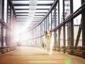 Hundemaedchen_Gaia_Langhaarcollie_52WochenHunde_Projekt2017_Collie (46)