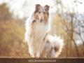 Hundemaedchen_Gaia_Langhaarcollie_52WochenHunde_Projekt2017_Collie (47)