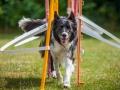 Hundemaedchen_Agility_Training_PSSV_Marburg_Ebsdorfergrund (10)