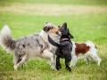Hundemaedchen_Agility_Training_PSSV_Marburg_Ebsdorfergrund (101)