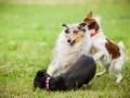 Hundemaedchen_Agility_Training_PSSV_Marburg_Ebsdorfergrund (102)