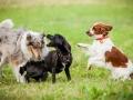 Hundemaedchen_Agility_Training_PSSV_Marburg_Ebsdorfergrund (106)