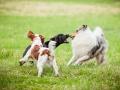 Hundemaedchen_Agility_Training_PSSV_Marburg_Ebsdorfergrund (110)