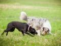 Hundemaedchen_Agility_Training_PSSV_Marburg_Ebsdorfergrund (111)