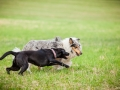 Hundemaedchen_Agility_Training_PSSV_Marburg_Ebsdorfergrund (112)