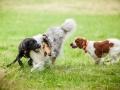 Hundemaedchen_Agility_Training_PSSV_Marburg_Ebsdorfergrund (113)