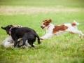 Hundemaedchen_Agility_Training_PSSV_Marburg_Ebsdorfergrund (115)