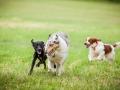 Hundemaedchen_Agility_Training_PSSV_Marburg_Ebsdorfergrund (117)
