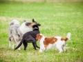 Hundemaedchen_Agility_Training_PSSV_Marburg_Ebsdorfergrund (122)