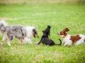 Hundemaedchen_Agility_Training_PSSV_Marburg_Ebsdorfergrund (124)