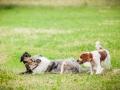 Hundemaedchen_Agility_Training_PSSV_Marburg_Ebsdorfergrund (128)