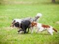 Hundemaedchen_Agility_Training_PSSV_Marburg_Ebsdorfergrund (131)