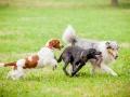 Hundemaedchen_Agility_Training_PSSV_Marburg_Ebsdorfergrund (134)