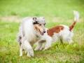 Hundemaedchen_Agility_Training_PSSV_Marburg_Ebsdorfergrund (136)