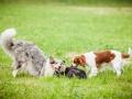 Hundemaedchen_Agility_Training_PSSV_Marburg_Ebsdorfergrund (138)