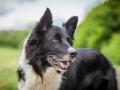 Hundemaedchen_Agility_Training_PSSV_Marburg_Ebsdorfergrund (144)