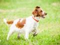Hundemaedchen_Agility_Training_PSSV_Marburg_Ebsdorfergrund (145)