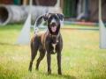 Hundemaedchen_Agility_Training_PSSV_Marburg_Ebsdorfergrund (17)
