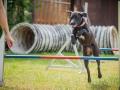 Hundemaedchen_Agility_Training_PSSV_Marburg_Ebsdorfergrund (18)