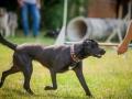 Hundemaedchen_Agility_Training_PSSV_Marburg_Ebsdorfergrund (22)