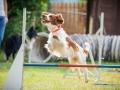 Hundemaedchen_Agility_Training_PSSV_Marburg_Ebsdorfergrund (24)