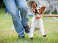 Hundemaedchen_Agility_Training_PSSV_Marburg_Ebsdorfergrund (29)