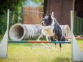 Hundemaedchen_Agility_Training_PSSV_Marburg_Ebsdorfergrund (33)