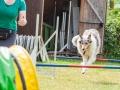 Hundemaedchen_Agility_Training_PSSV_Marburg_Ebsdorfergrund (38)