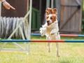 Hundemaedchen_Agility_Training_PSSV_Marburg_Ebsdorfergrund (51)