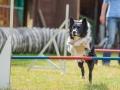 Hundemaedchen_Agility_Training_PSSV_Marburg_Ebsdorfergrund (57)