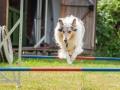 Hundemaedchen_Agility_Training_PSSV_Marburg_Ebsdorfergrund (65)