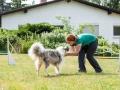 Hundemaedchen_Agility_Training_PSSV_Marburg_Ebsdorfergrund (67)