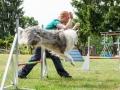 Hundemaedchen_Agility_Training_PSSV_Marburg_Ebsdorfergrund (73)