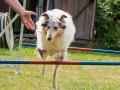 Hundemaedchen_Agility_Training_PSSV_Marburg_Ebsdorfergrund (75)