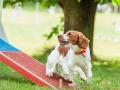 Hundemaedchen_Agility_Training_PSSV_Marburg_Ebsdorfergrund (86)