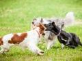 Hundemaedchen_Agility_Training_PSSV_Marburg_Ebsdorfergrund (97)