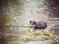 Border_Collie_Mischling_Maggy_tricolor_Senior_Hund_Hundefotografie_Tierfotografie_Marburg_Lahn_Wasser_Fotografin_Christine_Hemlep (11).jpg